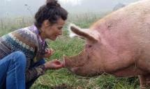 tracy and pig